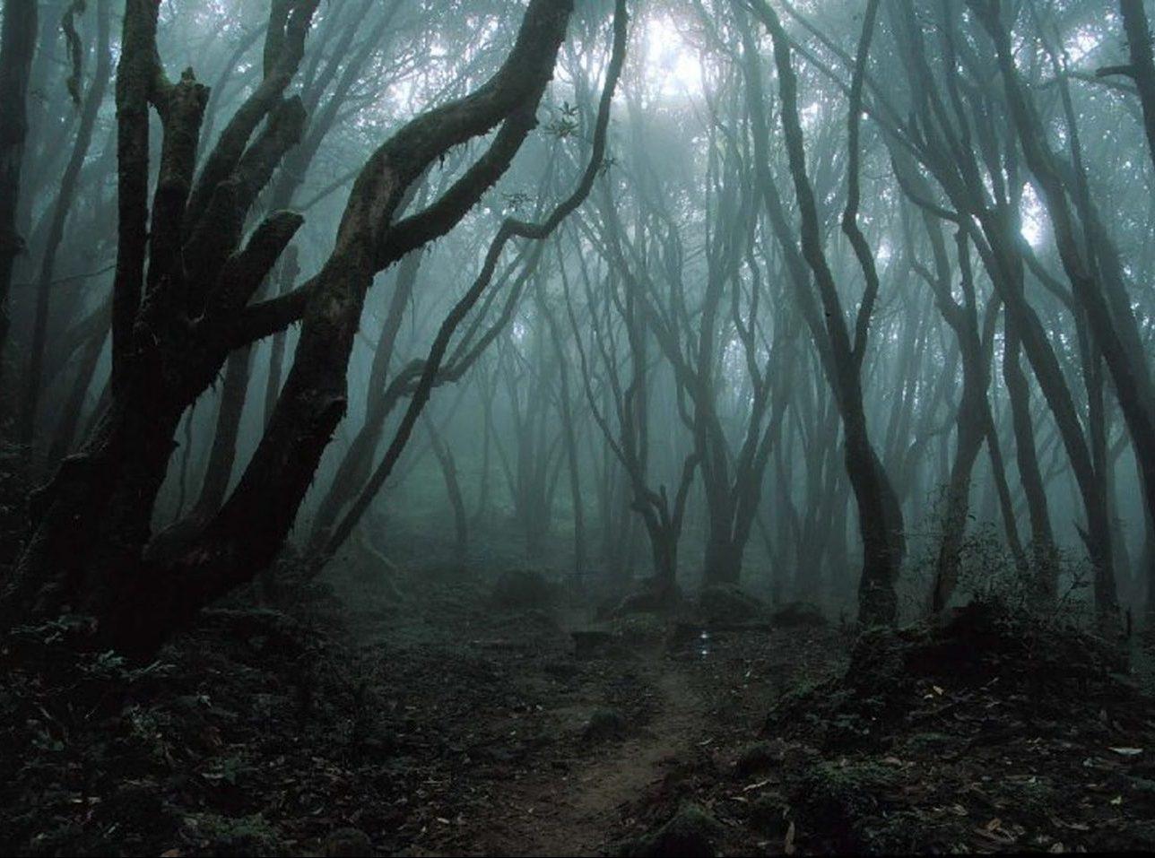 Sea Of Trees Movie 257524741